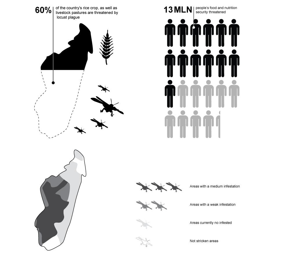FMD_Madagascar_Infographic_locust-plague